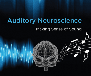 Odyologlar için; Auditory Neuroscience (İşitsel Sinirbilim)