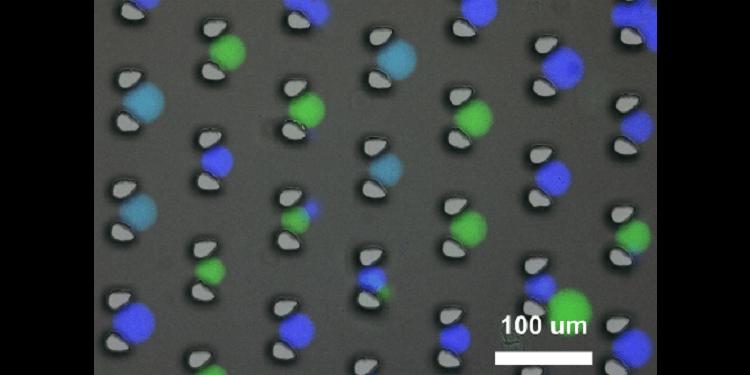 DNA Bilgisayarının Canlıda Kullanımı İçin Bölmelendirme Yaklaşımı Geliştirildi