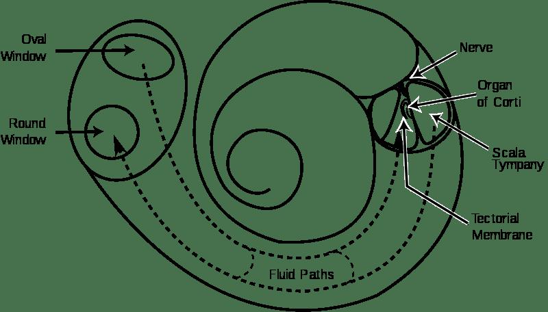 3 Adımda Ten Testi: Koklea'daki Ölü Bölgeleri Belirleme