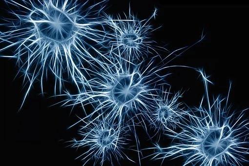 Beyin Plastisitesi: İşitme Kayıplı Çocuklarda Kritik Dönem